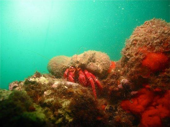 Diving Life : Hermit crab
