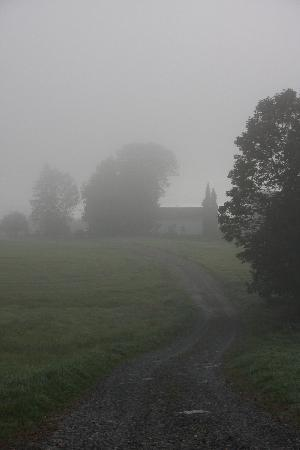 Cliff Haven Farm B&B: Misty morning walk down the lane