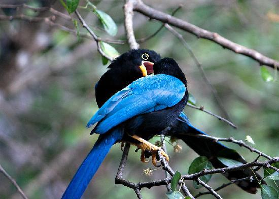 Chichen Itza With Jerry : Amazing birds!