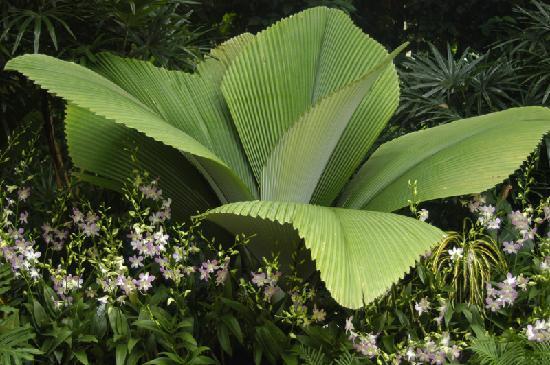สวนกล้วยไม้แห่งชาติสิงคโปร์: National Orchid Garden