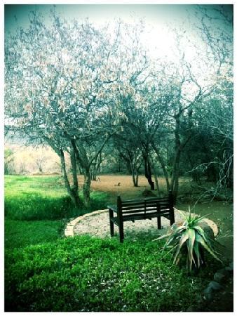 Mokolodi House: One part of the lovely garden.
