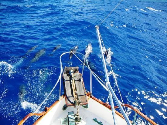 Nemo Cruises Day: Rencontre avec les dauphins