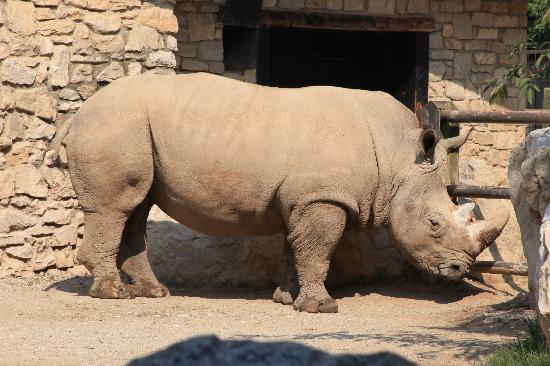 Valbrembo, Italie : Rinoceronte