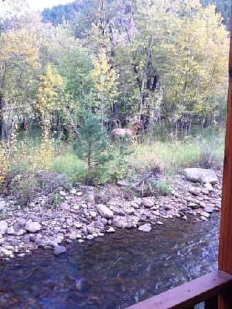 Paradise on the River: Elk grazing across the river from the cabin. He arrived 1/2 hr after we did!