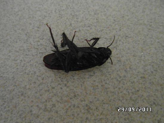 Travelodge Hardeeville: bug