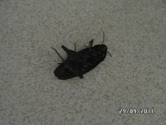 Travelodge Hardeeville: bug 2