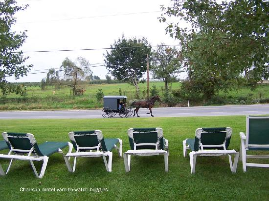 Amish Country Motel: Great place for viewing the buggies