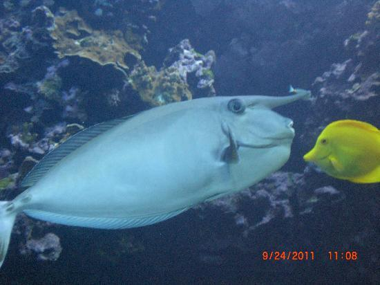 Maui Ocean Center: Fish