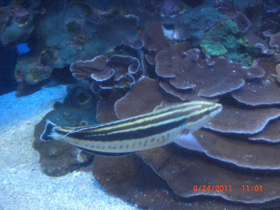 Maui Ocean Center: More fish