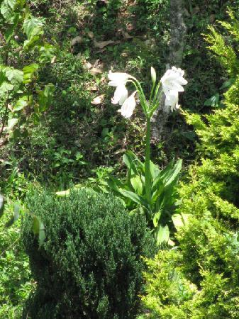 Mundax Homestay Yoga Retreat: White Lilies