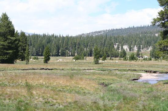 Yosemite Valley: Traumhafte Wiesen zum verweilen...