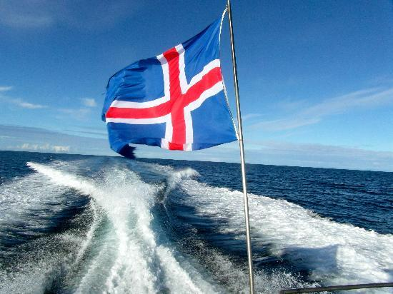 Whale Watching Reykjavik - Special Tours: at high speed