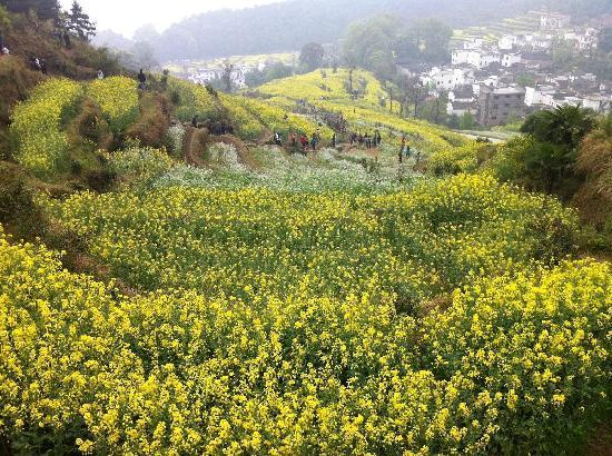 Jiangling Terrace Scenic Resort : Jiangling Terrace