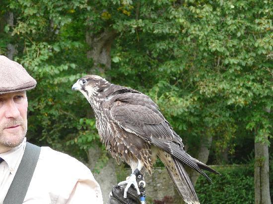 Dunrobin Castle and Gardens: The falconer's display is superb