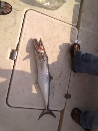 Barracuda Bay Sport Fishing : price catch landed