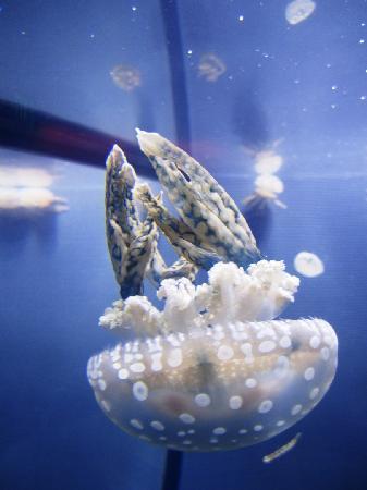 Mystic Aquarium: Jellyfish