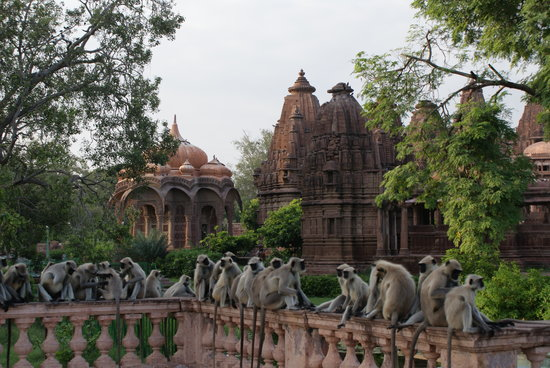 Image result for mandore garden jodhpur