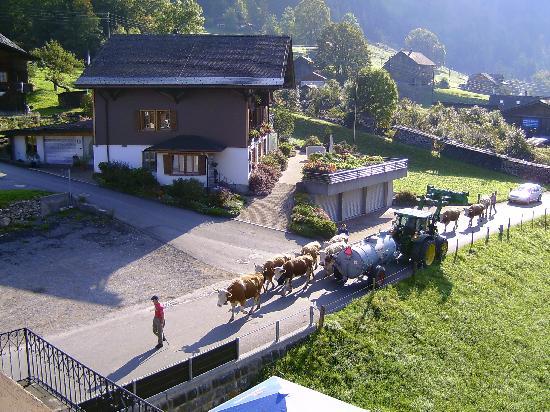 Bären Kiental Hotel: Auch sowas kann man erleben