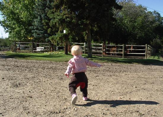 Whitemud Equine Learning Centre Association : good for all ages