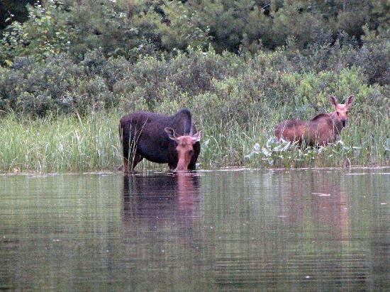 Massasauga Provincial Park : Moose-Three Finger Bay