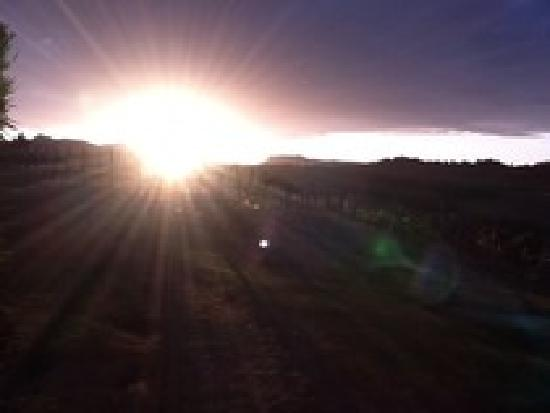Penny Ridge : The vinyard and a view of the Gold Coast