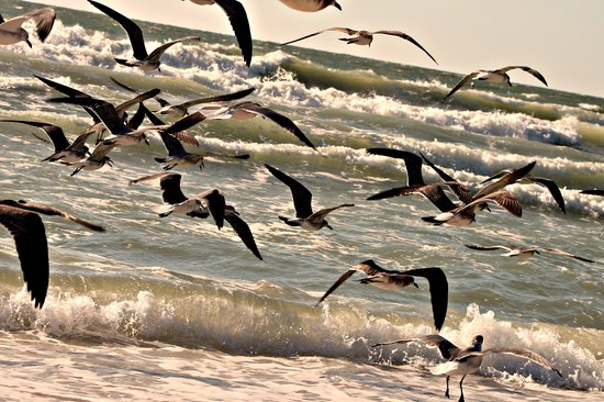 Casey Key, FL: the seagulls.
