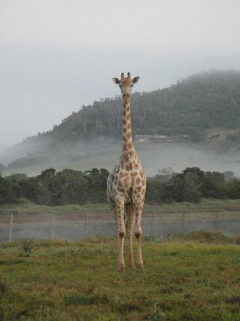 Kariega Game Reserve - River Lodge: Very tall!!!