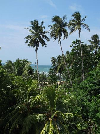 Black Beauty Guesthouse: View from the rooftop towards the beach