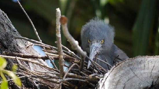 เฮรอน ไอแลนด์ รีสอร์ท: Heron Island's real owners