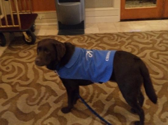 Pacific Gateway Hotel at Vancouver Airport: Cessna - the hotel dog