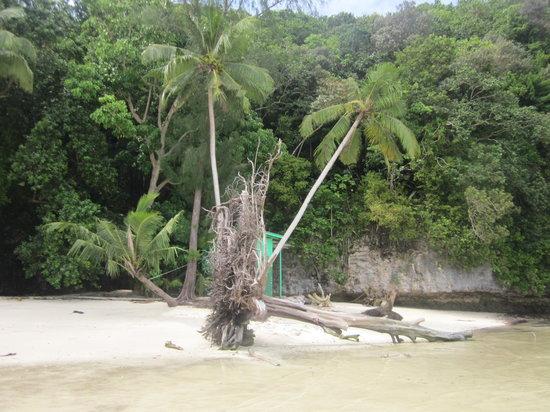 RITC - Rock Island Tour Company - Day Tour in Palau: 緑の箱がトイレ