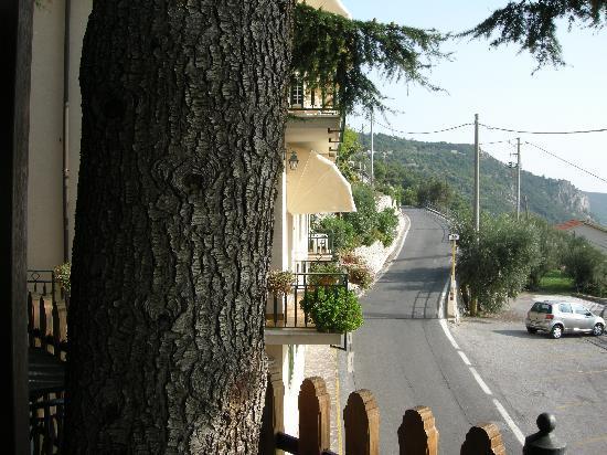 Albergo Rosita: Uno dei pini che infondono profumata tranquillità