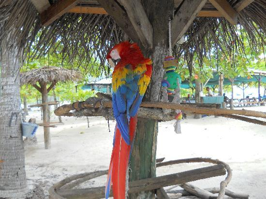 Jaco 360 Private Tours : On Tortuga Island