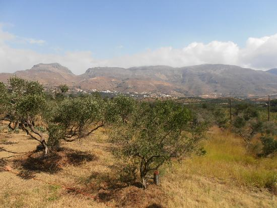 Labyrinth Studios: surrounded by olive trees...