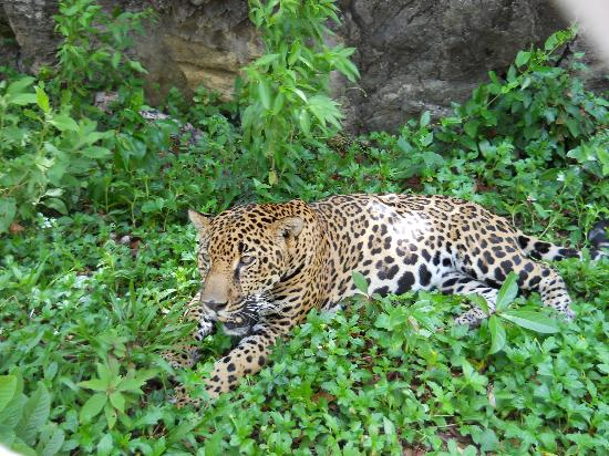 Anthony's Key Resort: Jaguar at Maya Key