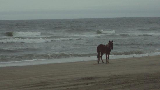 Wild Horse Adventure Tours: lone horse