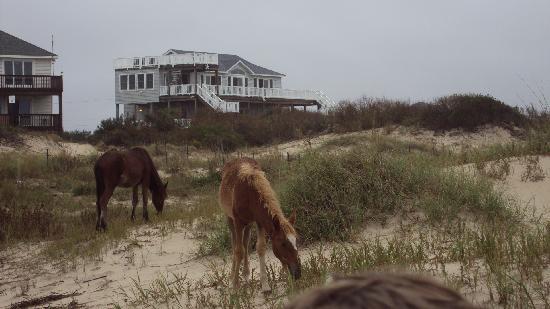 Wild Horse Adventure Tours: up close
