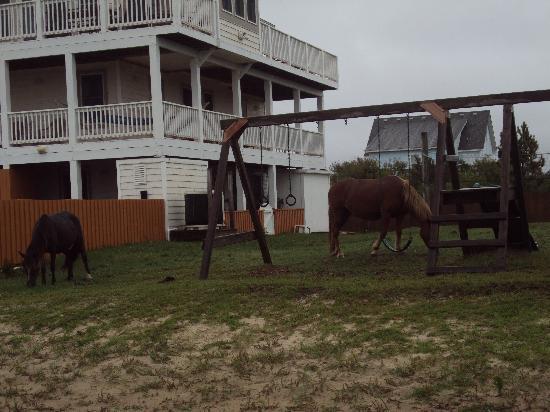Wild Horse Adventure Tours: in the neighborhood
