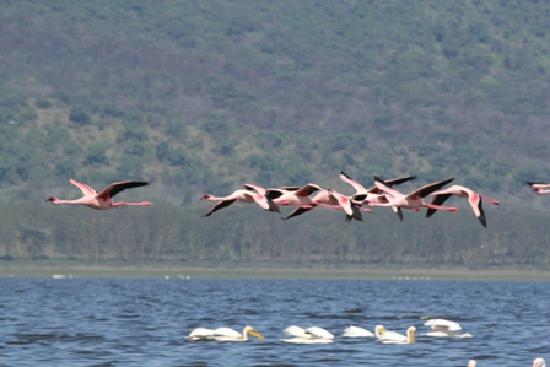 flying flamingoes ii by - photo #18