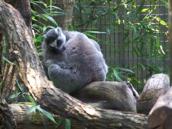 Trevor Zoo: Habitats are well designed