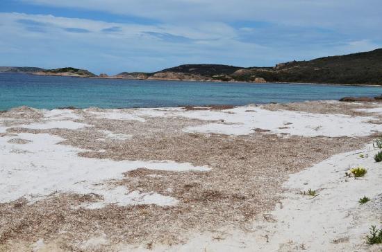 Esperance, Australia: weed wash