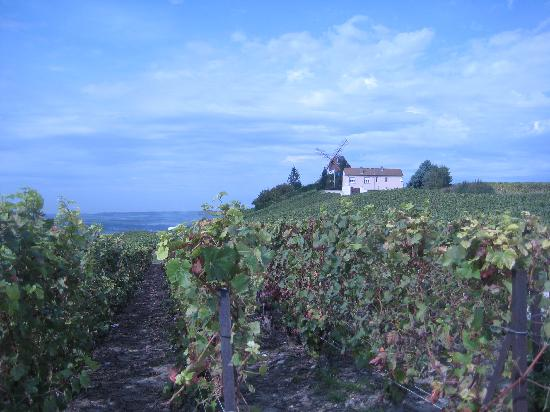 Best of France Tours: Outside of Ludes (view of the Mumm's windmill)