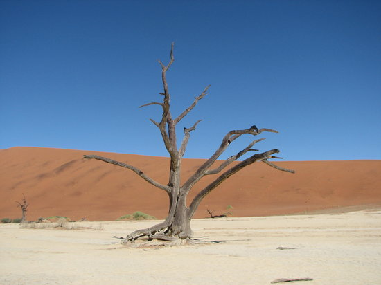 Namib-Naukluft Park, Namíbia: petrified tree