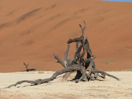 Sossusvlei: petrified tree
