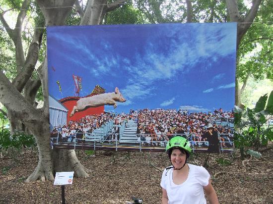 Bike Buffs - Sydney Bicycle Tours: Art & About Hyde Park