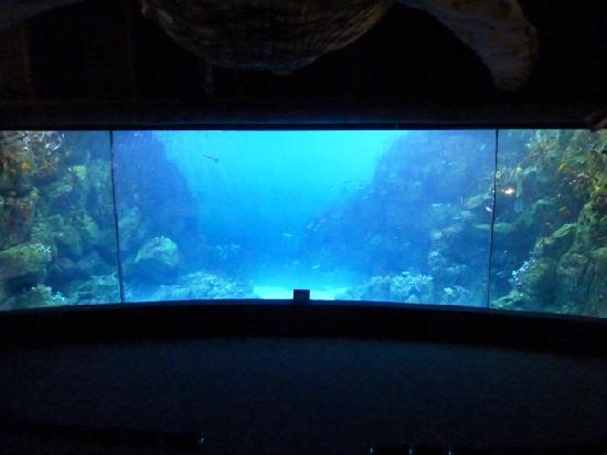 National Marine Aquarium : Huge underwater viewing screen