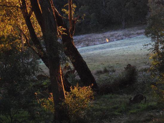 Melaleuca Mountain Chalets: Dawn