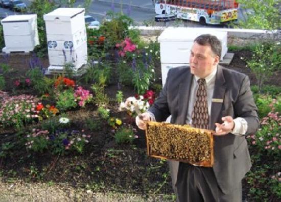 Fairmont Waterfront : Rooftop bee hives in herb garden