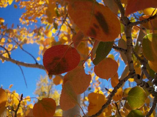AppleLodge Bed and Breakfast: Enjoy the aspens changing colors in the Fall