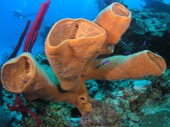UpClose Belize: Scuba Dive Belize!